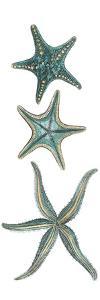Aquamarine Starfish I by Vision Studio