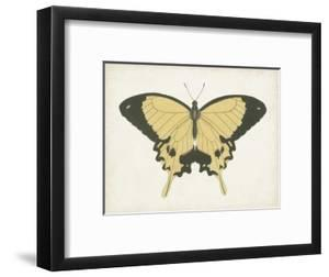 Beautiful Butterfly I by Vision Studio