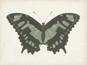 Beautiful Butterfly II by Vision Studio