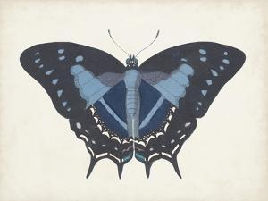 Beautiful Butterfly III by Vision Studio