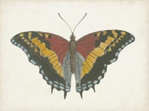 Beautiful Butterfly IV by Vision Studio