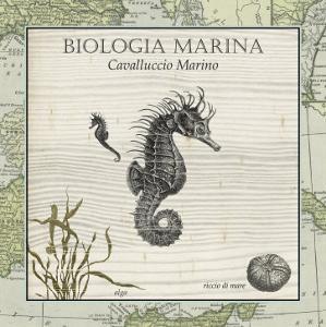 Biologia Marina III by Vision Studio