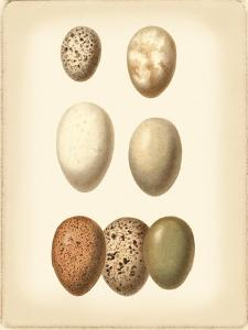 Bird Egg Study II by Vision Studio