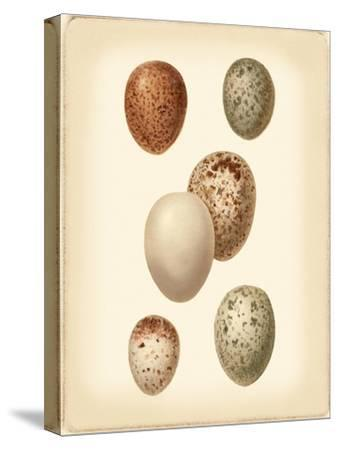 Bird Egg Study III