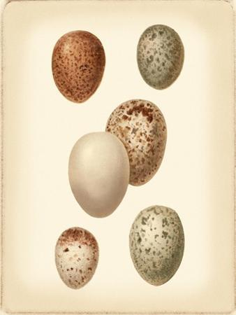Bird Egg Study III by Vision Studio