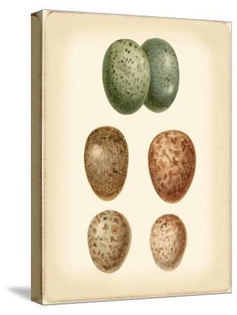 Bird Egg Study V