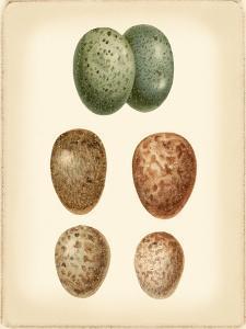 Bird Egg Study V by Vision Studio