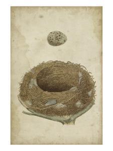 Bird's Nest Study I by Vision Studio