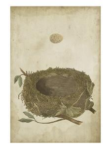Bird's Nest Study II by Vision Studio