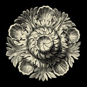 Black and Tan Rosette III by Vision Studio