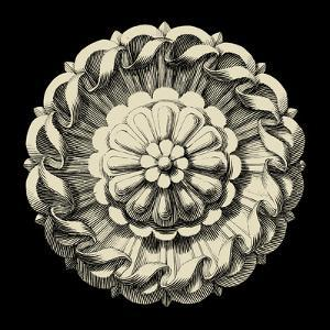 Black and Tan Rosette IV by Vision Studio