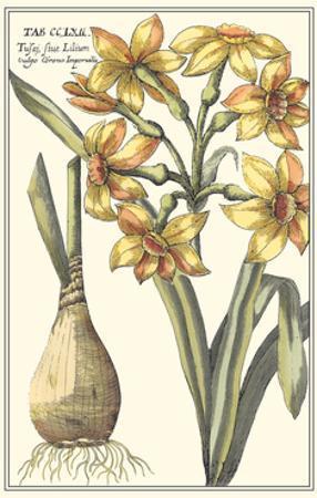 Botanical Beauty IV