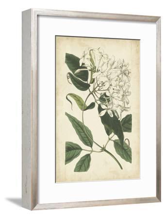 Botanical Display II
