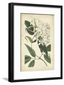 Botanical Display II by Vision Studio