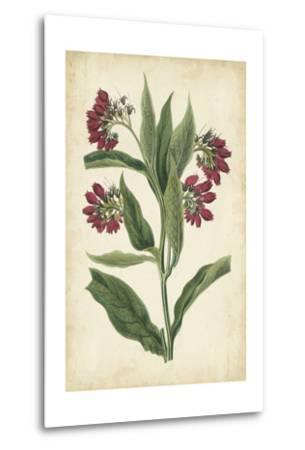 Botanical Display IV