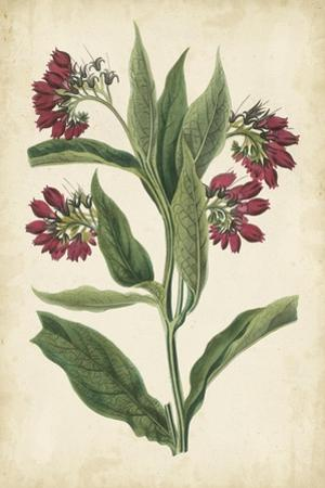 Botanical Display IV by Vision Studio