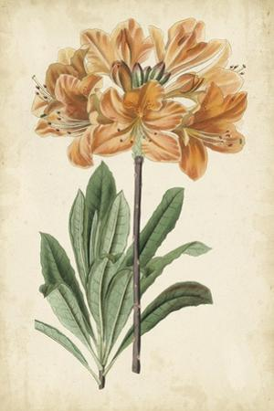 Botanical Display V by Vision Studio