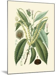 Botanical Glory II by Vision Studio