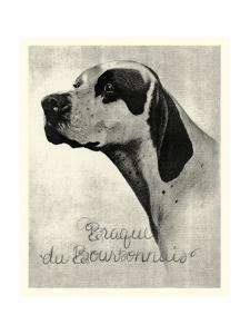 Brague du Bourbonnais by Vision Studio