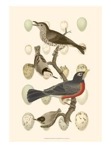 British Birds and Eggs III by Vision Studio