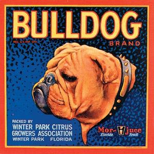 Bull Dog by Vision Studio