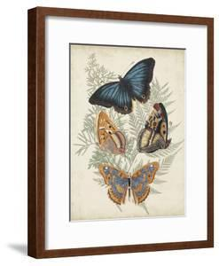Butterflies and Ferns V by Vision Studio