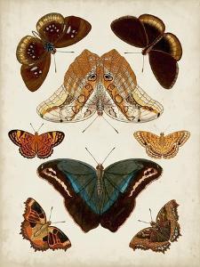 Butterflies Displayed II by Vision Studio