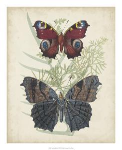 Butterflies & Ferns III by Vision Studio