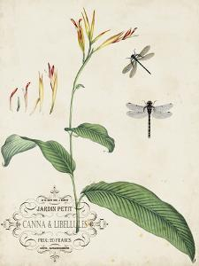 Canna and Dragonflies I by Vision Studio