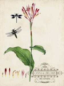 Canna and Dragonflies II by Vision Studio