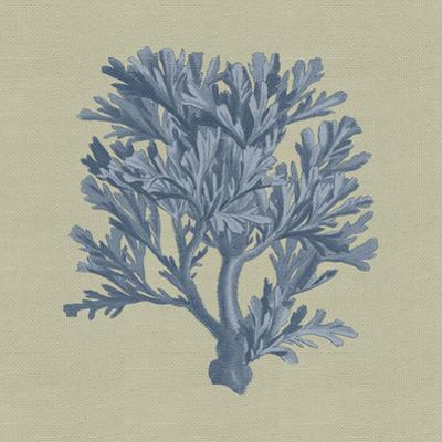 Chambray Coral IV by Vision Studio