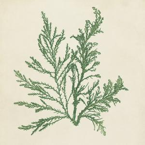 Chromatic Seaweed I by Vision Studio