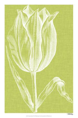 Chromatic Tulips VI