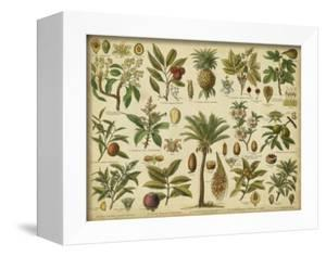 Classification of Tropical Plants by Vision Studio