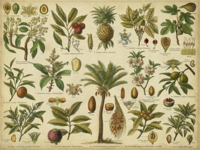 Classification of Tropical Plants