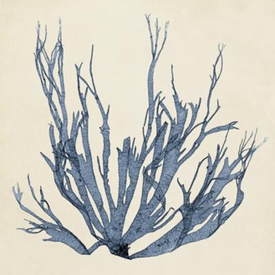 Coastal Seaweed I
