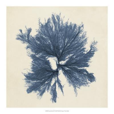 Coastal Seaweed V