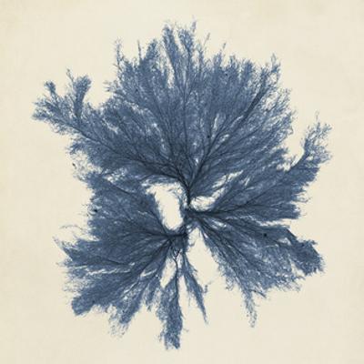 Coastal Seaweed V by Vision Studio