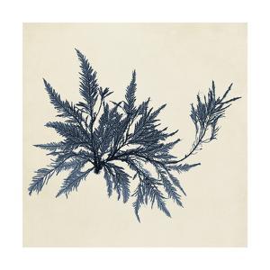 Coastal Seaweed VII by Vision Studio