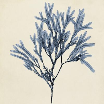 Coastal Seaweed VIII by Vision Studio