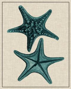 Coastal Starfish II by Vision Studio