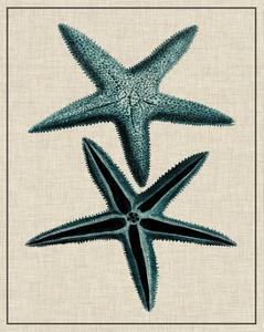 Coastal Starfish III by Vision Studio