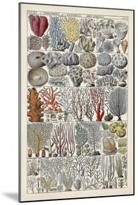 Coral Chart by Vision Studio