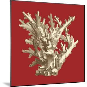 Coral on Red I by Vision Studio