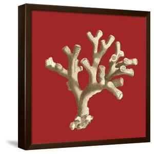 Coral on Red II by Vision Studio