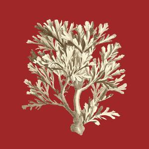 Coral on Red IV by Vision Studio