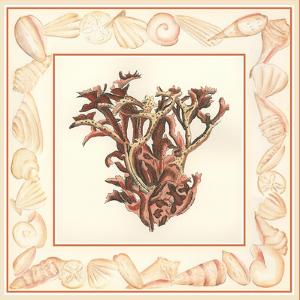 Coral with Shell Border III by Vision Studio