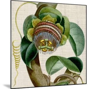 Cropped Turpin Tropicals IV by Vision Studio