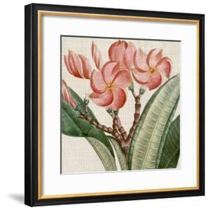 Cropped Turpin Tropicals VII by Vision Studio
