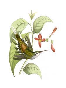 Delicate Hummingbird I by Vision Studio